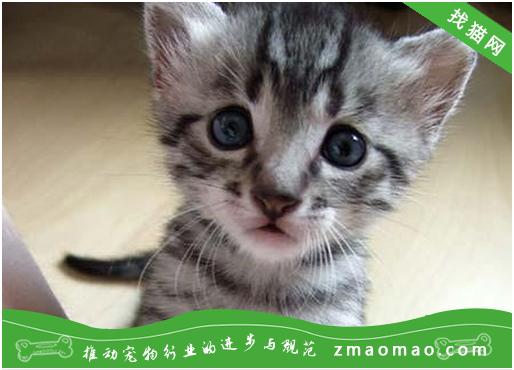 【猫饭攻略】自制猫咪的胡萝卜鸡肉菜饭