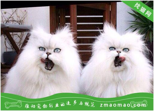 【猫粮攻略】自制猫咪的牛腩鸡肉饭