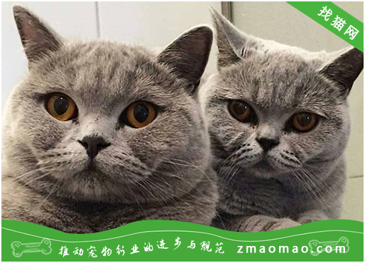 【猫饭攻略】自制猫咪的鸽子牛肉南瓜饭