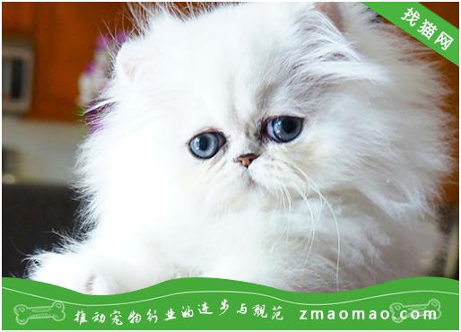 【猫饭攻略】自制猫咪的酱拌鸡胸肉