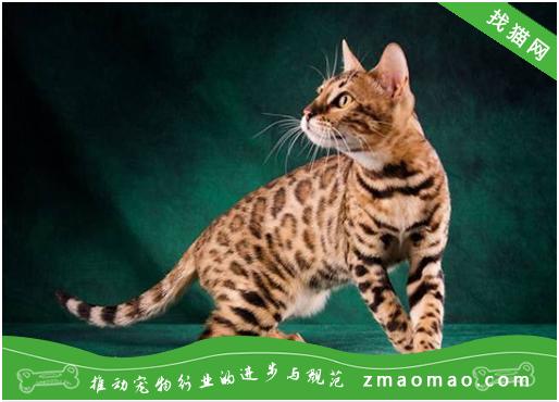 【猫饭攻略】自制猫咪的鸡肝牛肉南瓜饭