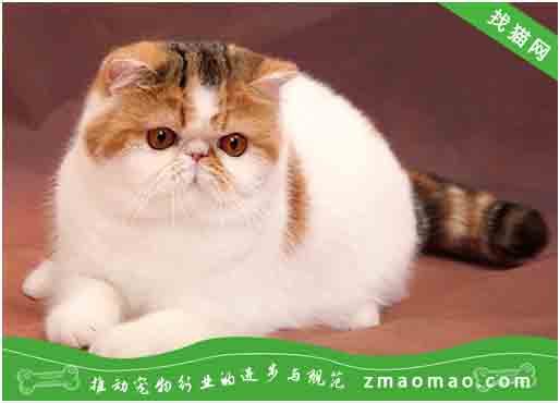 【猫饭攻略】自制猫咪的猪骨牛肉蔬菜饭