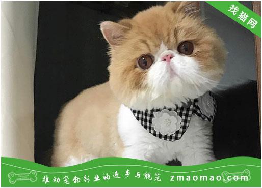 【猫饭攻略】两款夏天家庭自制开胃猫饭